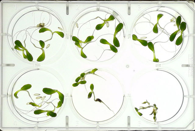 plant-test